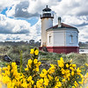 Gorse and Coquille Lighthouse