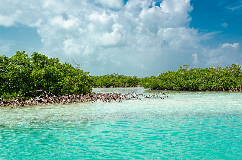 Little Exuma Mangroves
