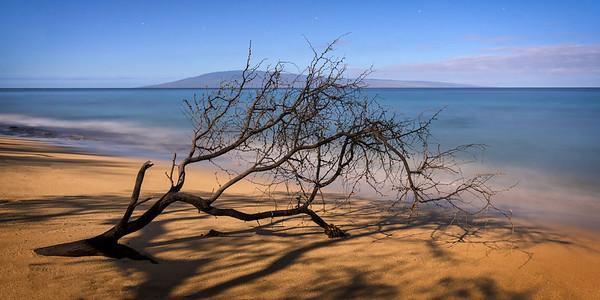 Kaanapali Beach Branch, Study 1, Maui, Hawaii