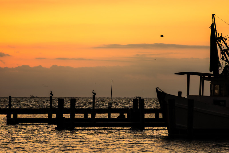 Aransas Bay Pelicans Sunrise