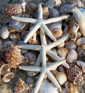 Three  Stars and Shells