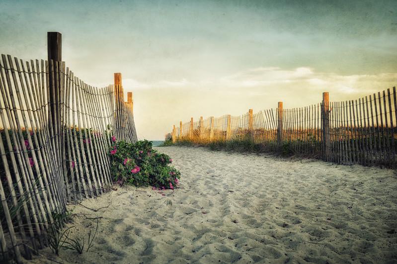 beach rose..