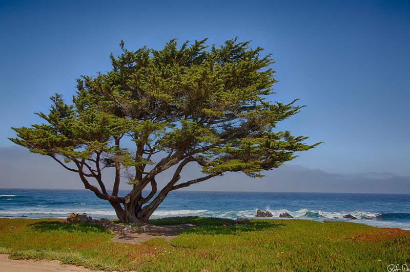 Sunset Drive Monterey