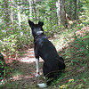 09/10 - When we stop on the trail, Kenda always keeps looking forward.