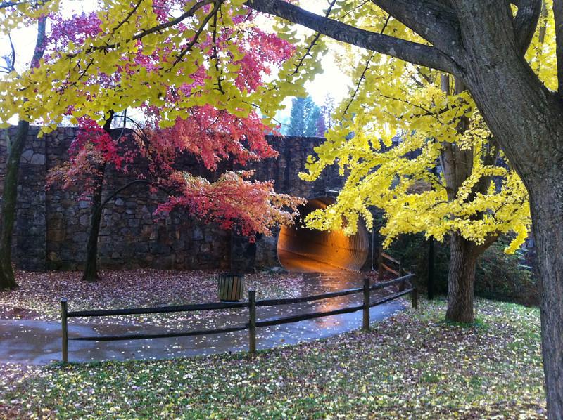 Rainy dogwalk on the Greenbelt in Maryville. 11/12/12