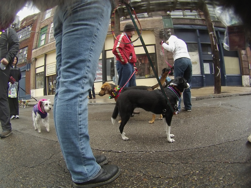 Mardi Growl, March 2 2013: Pics from the ArwenCam
