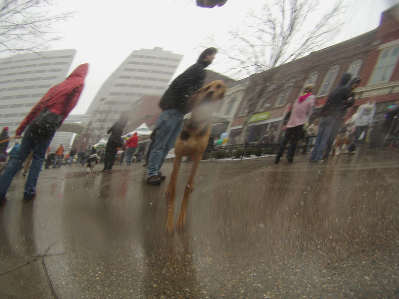 Mardi Growl, March 2 2013: Pics from the ArwenCam (it was snowing!)