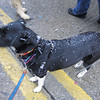 Mardi Growl, March 2 2013: The weather was delightful, snow & ice pellets