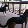 Hounds on Patrol: Moe and Maeby at the Sandts' house.