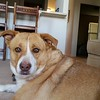 Coco, Dad's dog, has been adopted by Pat and Tom Lujan. She is in loving care.