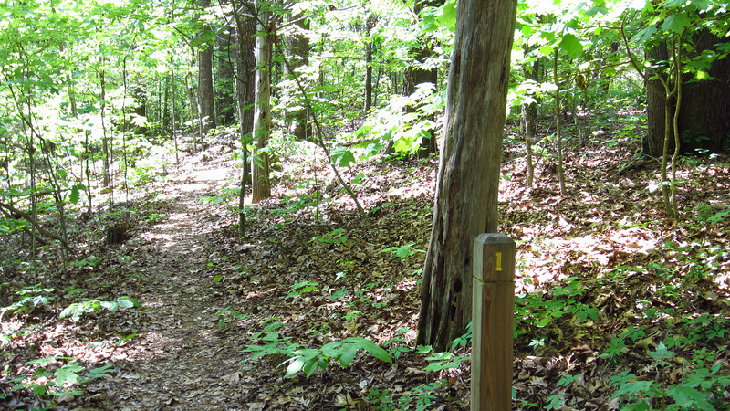 East Lakeshore Trail, Sinking Creek Branch Mile Marker 1, 04/02/12.