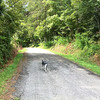 Sally joined me and Kenda on our morning walk.
