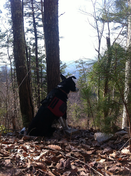 03/10/14 - Kenda and I hiked Chilhowee Mountain from the Foothills WMA. Just over ten miles round trip on an absolutely gorgeous day.
