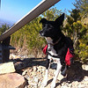 03/10/14 - Kenda under the power lines at the top of Chilhowee Mountain. She carried her own food and water.