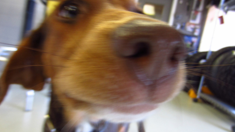 Coco says hi, up close and personal