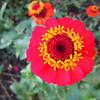 Flowers in Debbie Dickie's garden, Townsend.