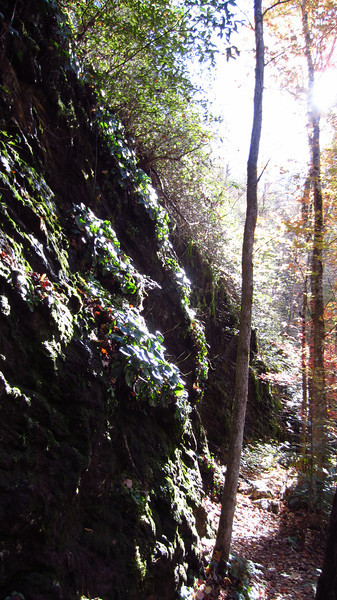 A dazzle of moss, water and sunlight. Slickrock Creek Trail, 10/24/11