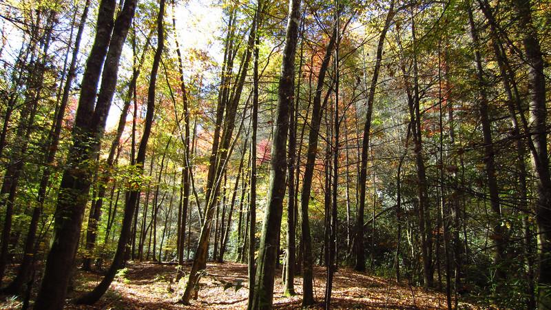 Slickrock Creek Trail, 10/24/11.