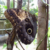 Cruise 2012: the butterfly house