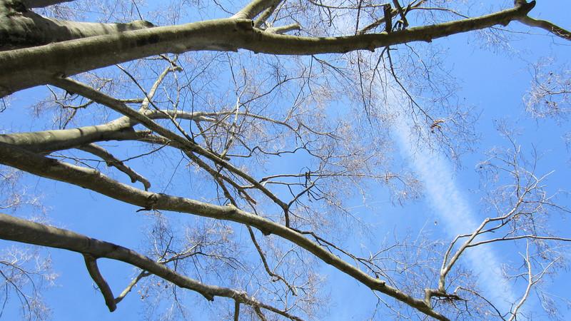 Tree & sky, Jack Greene Park, Maryville, TN