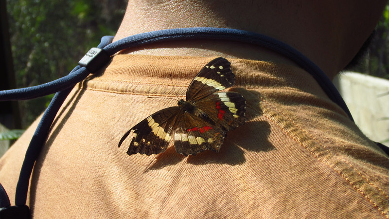 Cruise 2012: Francois gets a hitchhiker in the butterfly house, Belize