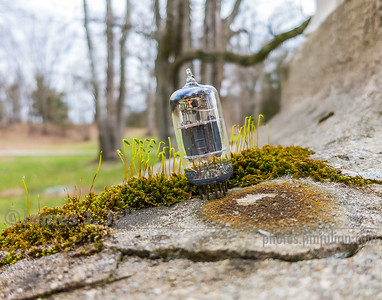 Vacuum Tube Lost in the Park 1