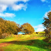 Clent Hills Summertime