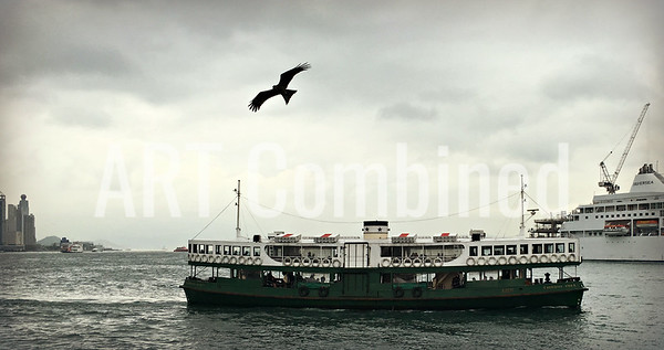 Eagle over the star ferry