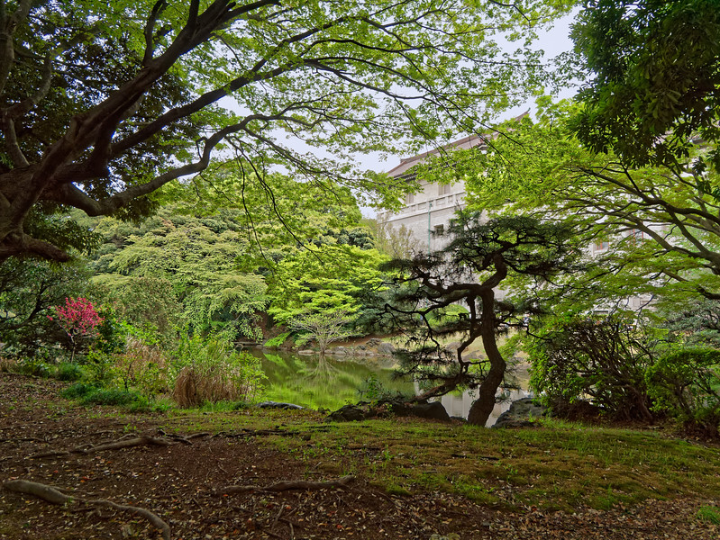 The museum is located in Ueno Park, a spacious park in Taito, Tokyo, which is also home to several other museums. This view from one small part of the park takes in the rear of the museum's Japanese Gallery in the background.