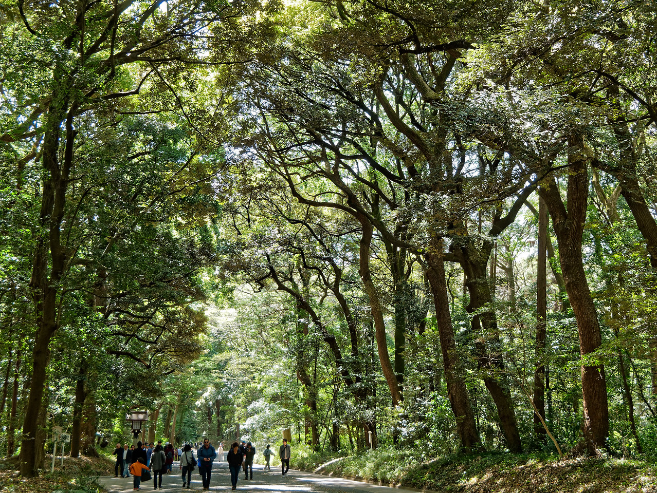 Three hundred and sixty-five species of trees were donated by people from all parts of Japan for the creation of the 170-acre park surrounding the shrine.