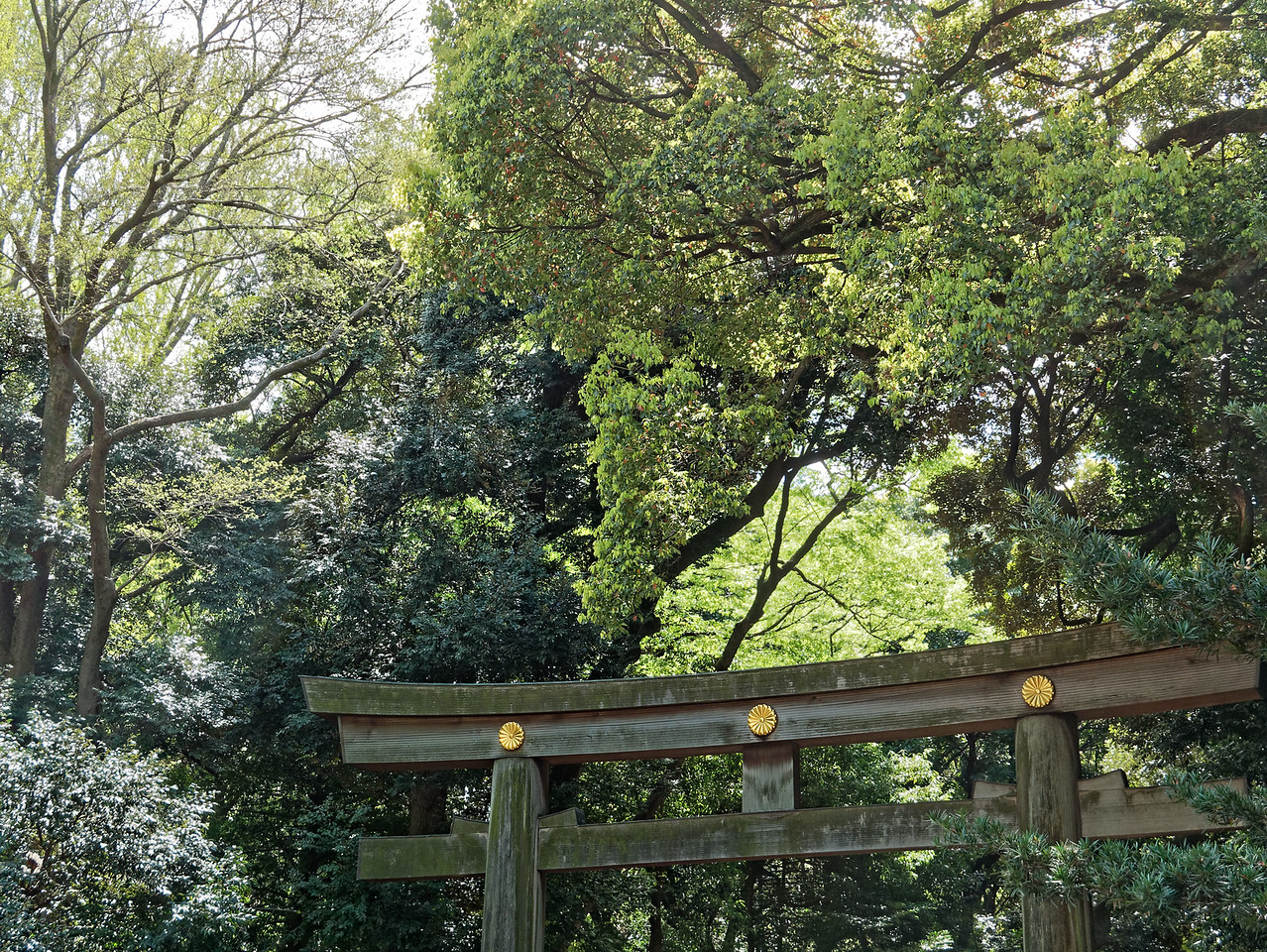 Torii marking an outer entrance to the shrine