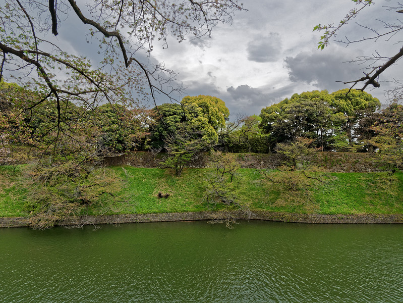A view along Chidorigafuchi, a promenade in Chiyoda-ku, Tokyo, looking towards the grounds of the Imperial Palace. The promenade is hugely popular for viewing cherry trees when in blossom. We arrived a little past their peak and had the promenade largely to ourselves.