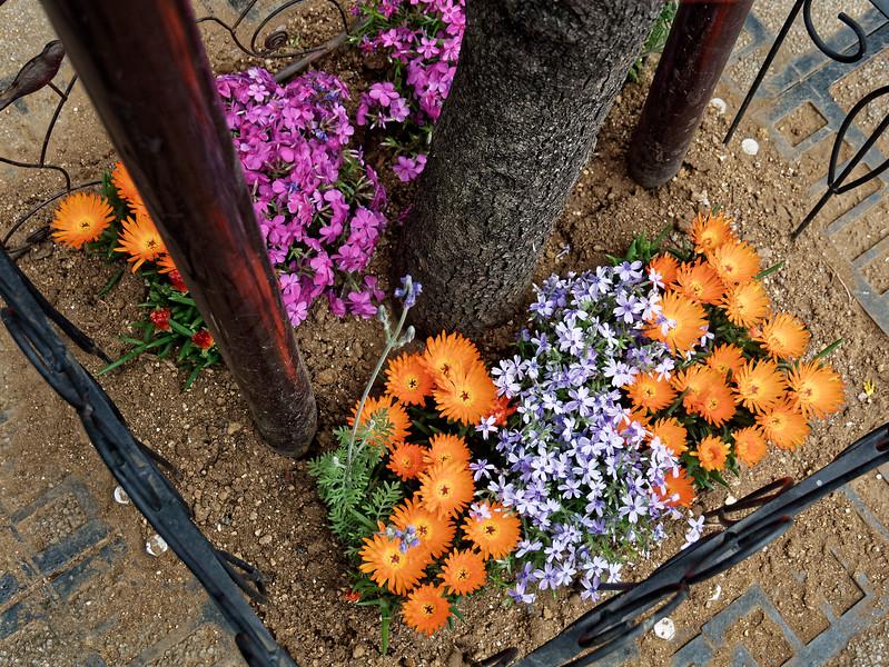 Sidewalk plantings, Asakusa, Tokyo