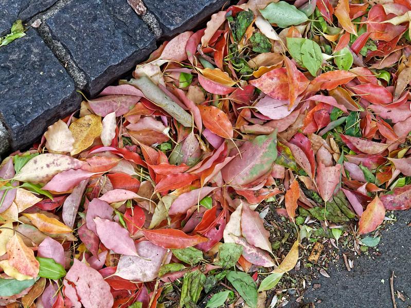 Fallen color. Ueno, Tokyo