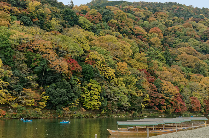 Arashiyama is especially popular in the spring, when the cherry trees are in blossom, as well as in the fall, as the leaves change colors. For the benefit of tourists, traditional cormorant fishing is practiced on the Hozu River during the months of July and August.