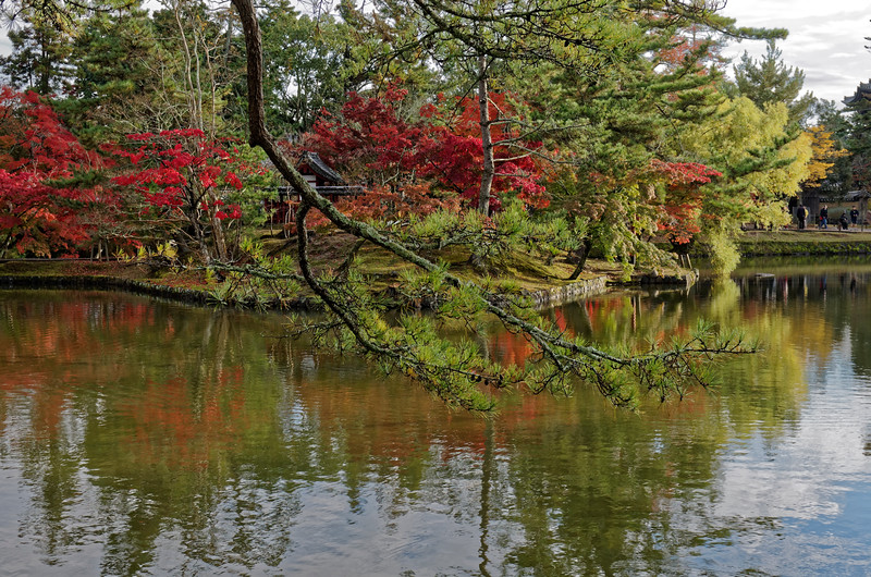 A pond within Nara Park