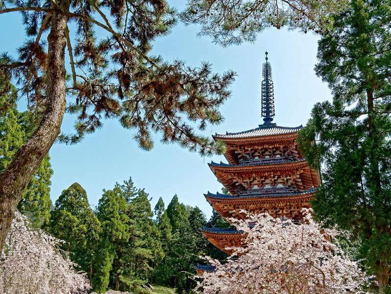 The temple's five-story pagoda, dating from 951, is the oldest building in Kyoto. It is a national treasure.