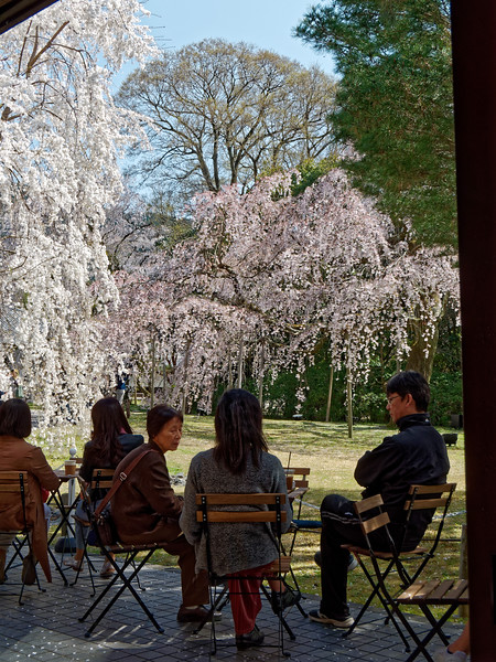 Technically, maybe not a 'street' scene: A restaurant on the grounds of Daigo-ji Temple.