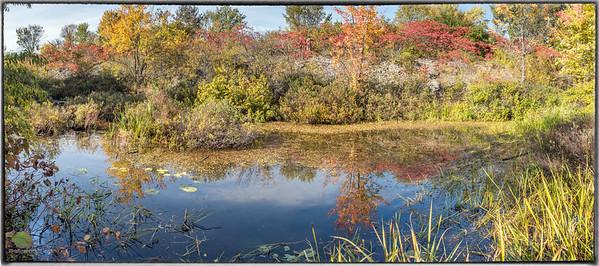 Autumn Foliage Near Mud Lake
