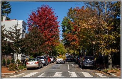 Fall Foliage on Georgetown Street