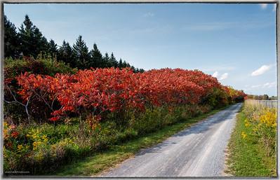 Greenbelt Pathway West Ottawa