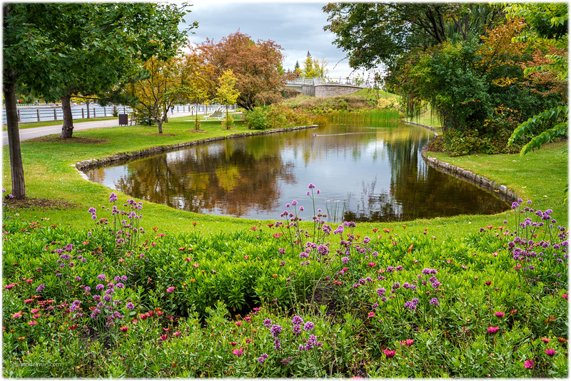 Glebe Pond Near Flora Footbridge