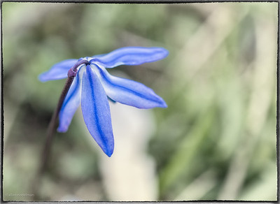 First Spring Wildflower