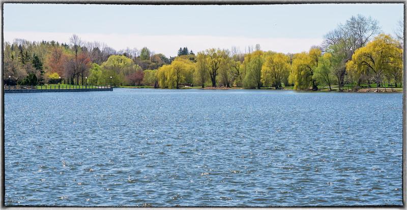 Arboretum Across Dow's Lake