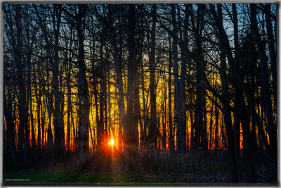 Sunset Through the Forest