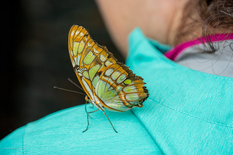 Butterfly Show at Museum of Nature Ottawa