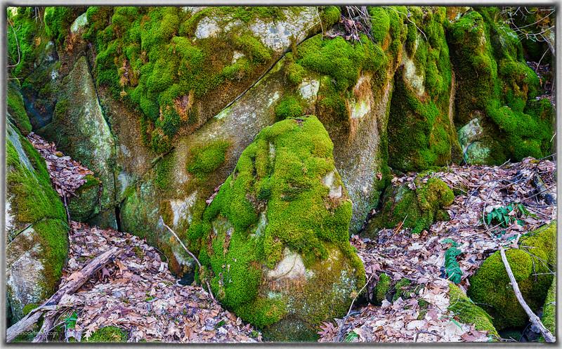 Macnamara Trail Arnprior