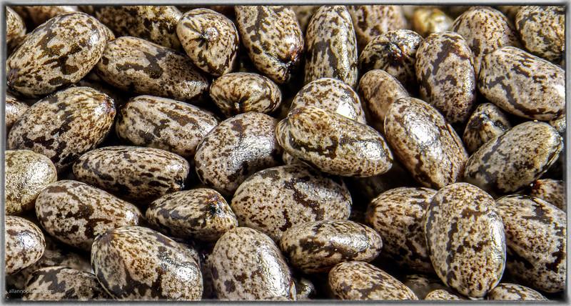 Chia Seeds Up Close