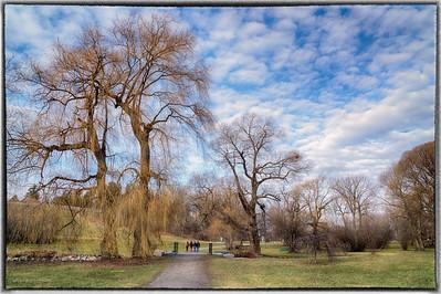 Arboretum, Ottawa, December 25, 2015