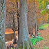"""November 13, 2014<br /> <br /> """"Reading about nature is fine, but if a person walks in the woods and listens carefully, he can learn more than what is in books, for they speak with the voice of God."""" ~ George Washington Carver<br /> <br /> Greenville Garden Club's Cypress Preserve (aka Greenville Cypress Preserve)<br /> Located at the corner of Highway 82 West and Cypress Lane <br /> Greenville, MS<br /> <br /> Official website: <a href=""""http://www.greenvillecypresspreserve.org"""">http://www.greenvillecypresspreserve.org</a>"""